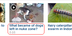 What became of dogs left in nuke zone?
