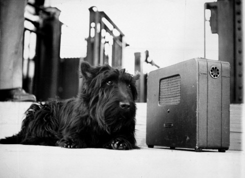 Franklin D. Roosevelt's dog Fala, listening to the president's speech on the radio. Photo: AP