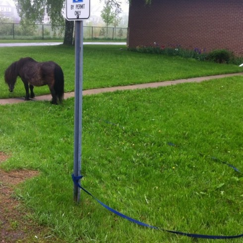 Someone appears to have misplaced their tiny pony