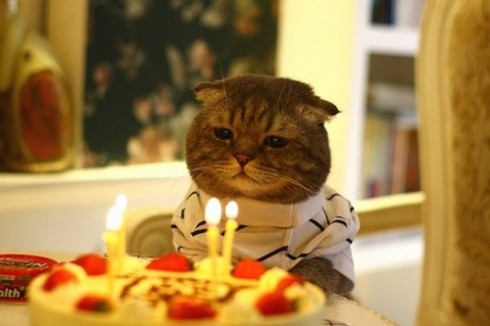 Birthday Cat - found at: http://whoamwenow.blogspot.com/2010/04/birthday-kitties.html