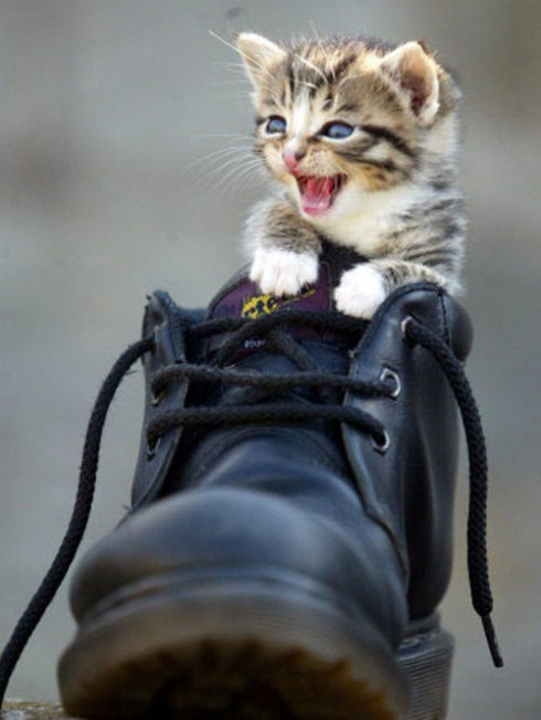 Kitten in a shoe, found at http://www.smosh.com